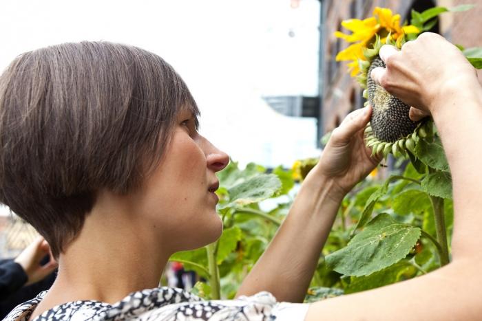 Cd Mosi Staff Count Turing Sunflowers