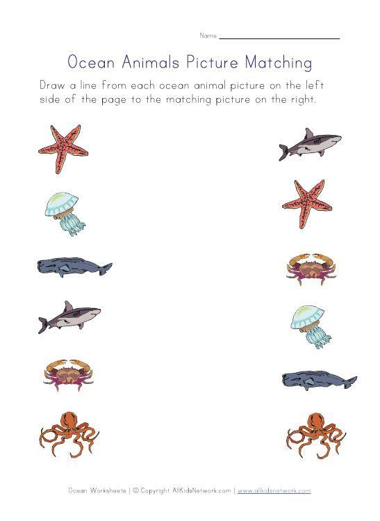 Ocean Animals Worksheets For Kids