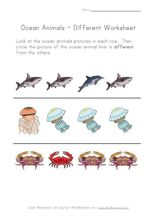 Ocean Life Worksheet