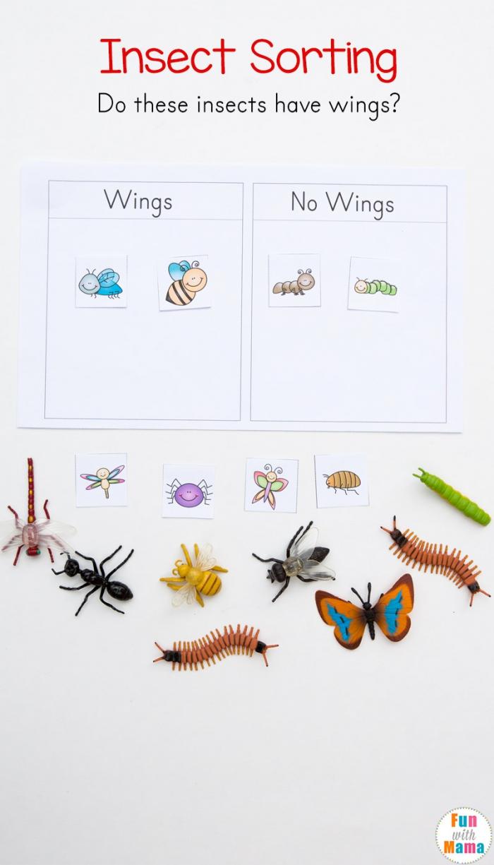 Preschool Insect Theme Sorting Worksheet Bug Activities