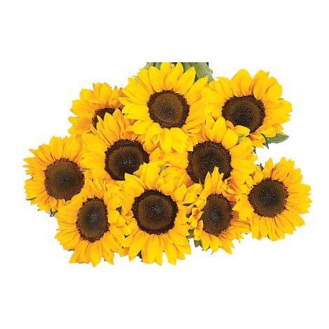Tinted Sunflower