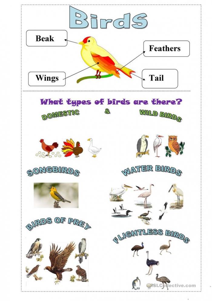 Birds Worksheets – Same