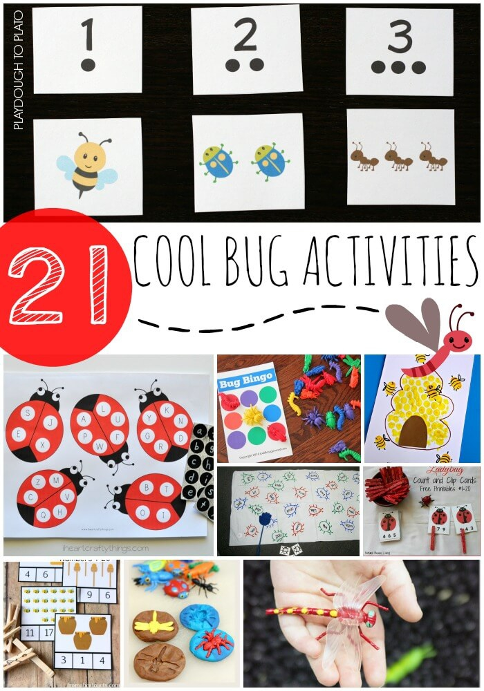 Learn About Bugs Worksheets For Kids