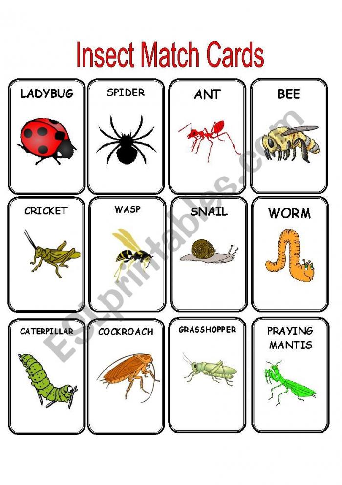 Bug Matching Worksheets