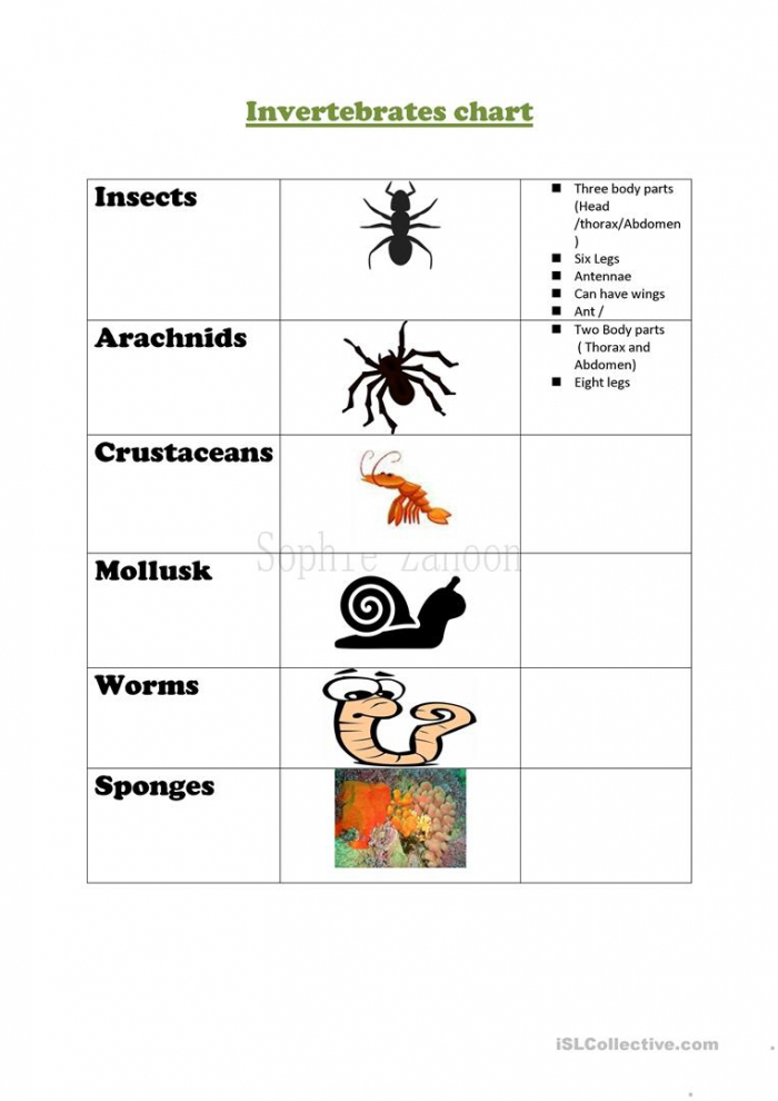 All About Invertebrates Worksheets