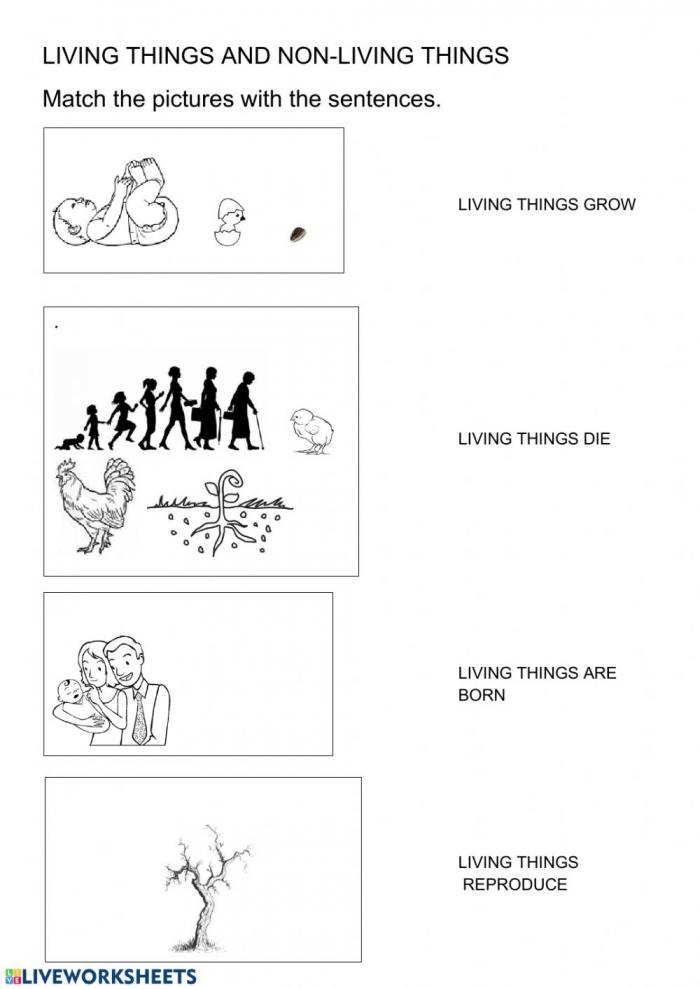Living Things Worksheets