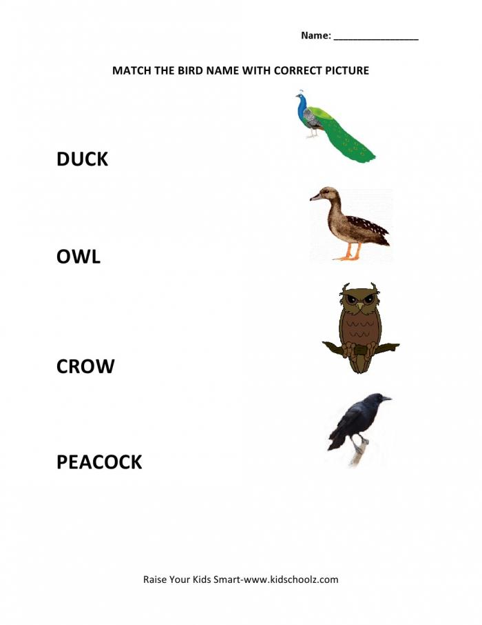 Matching Worksheets – Birds