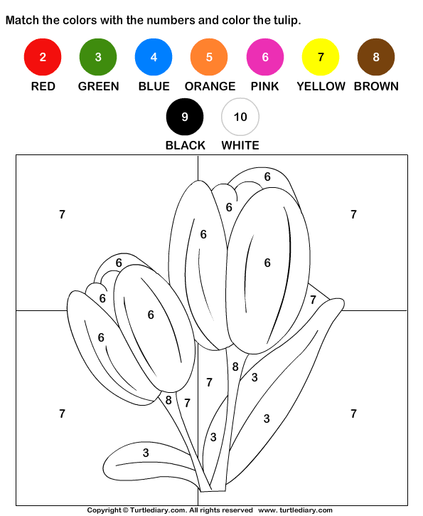 Color The Tulip By Numbers Worksheet