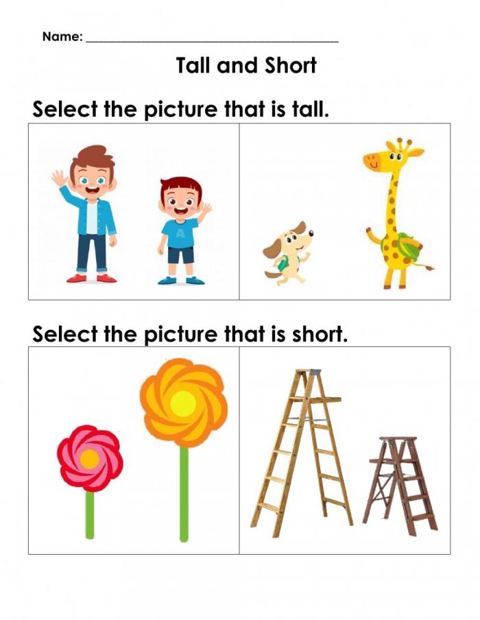 Maths Concepts Tall And Short Worksheet