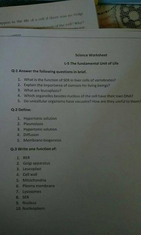 Solve This Science Worksheet L