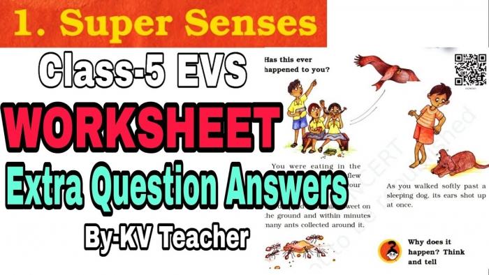 Worksheet Super Senses Class