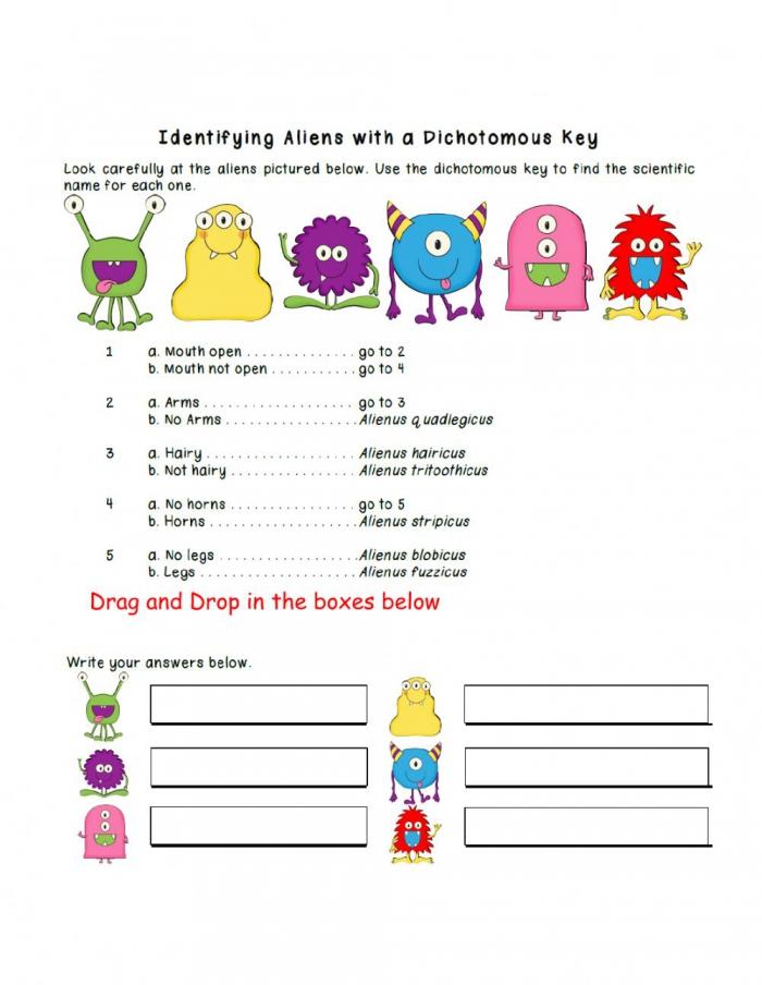 Dichotomous Key Practive Worksheet