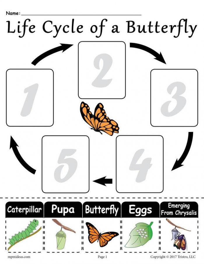 Life Cycle Of A Butterfly Printable Worksheet Supplyme
