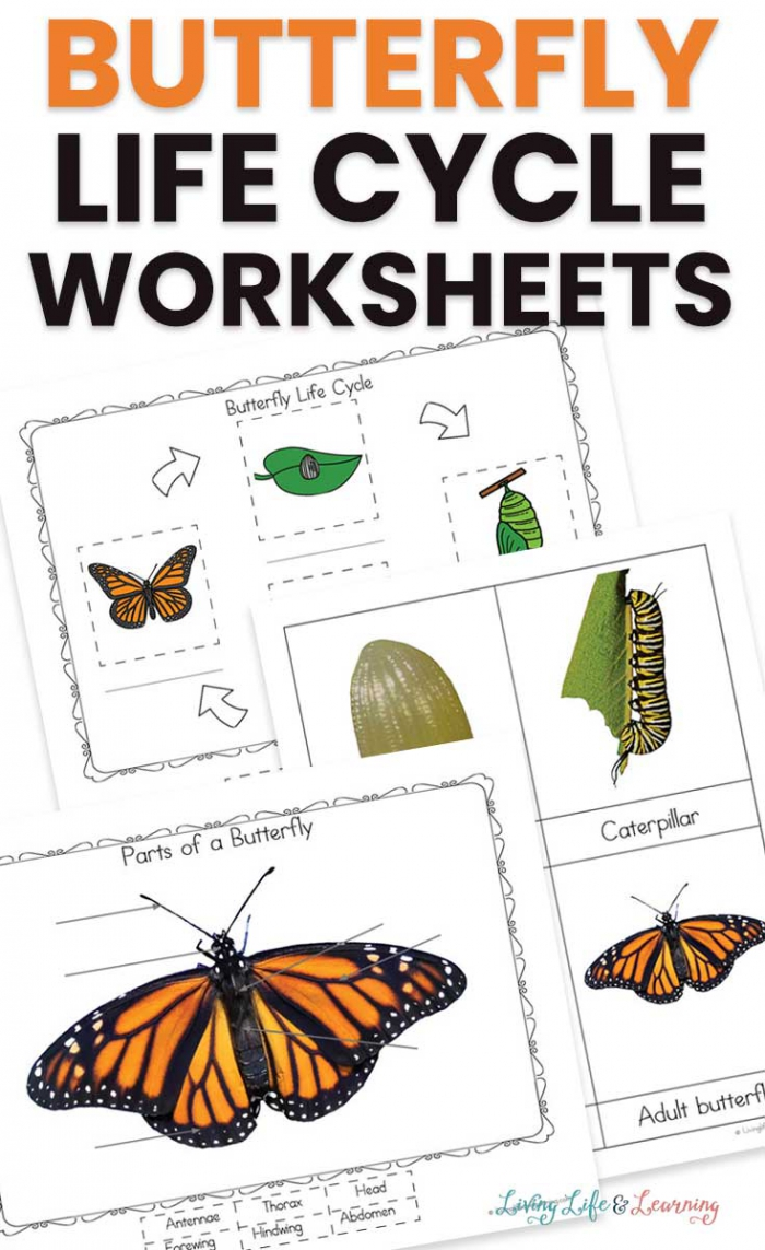 Life Cycle Of A Butterfly Worksheets