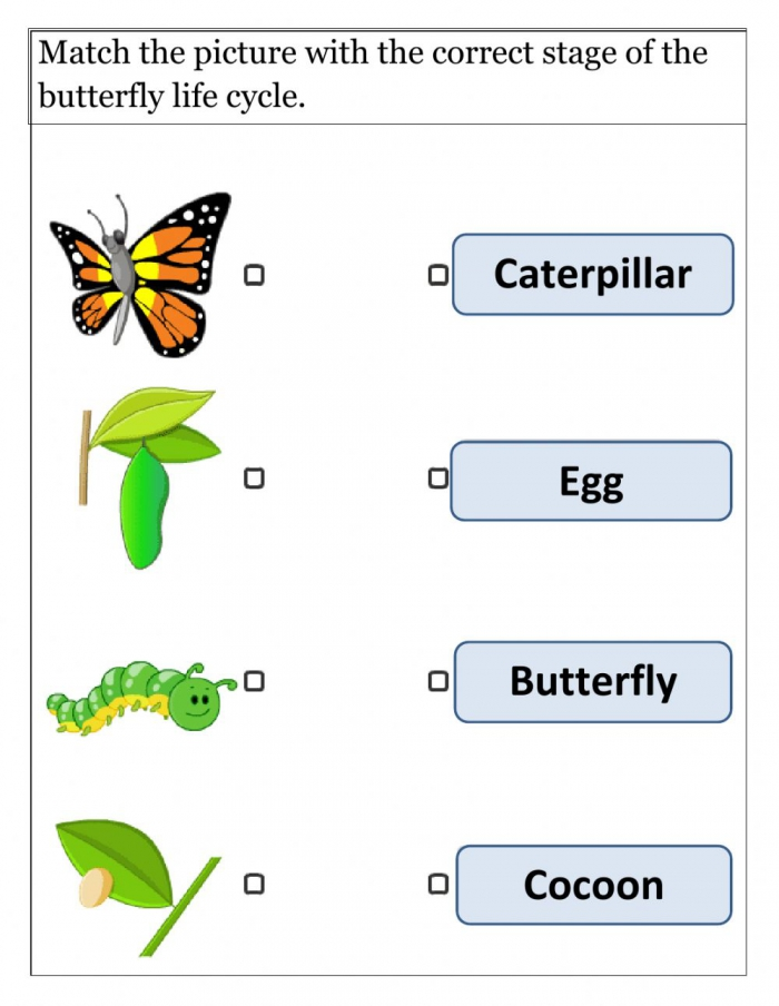 Life Cycle Of Butterfly Interactive Worksheet