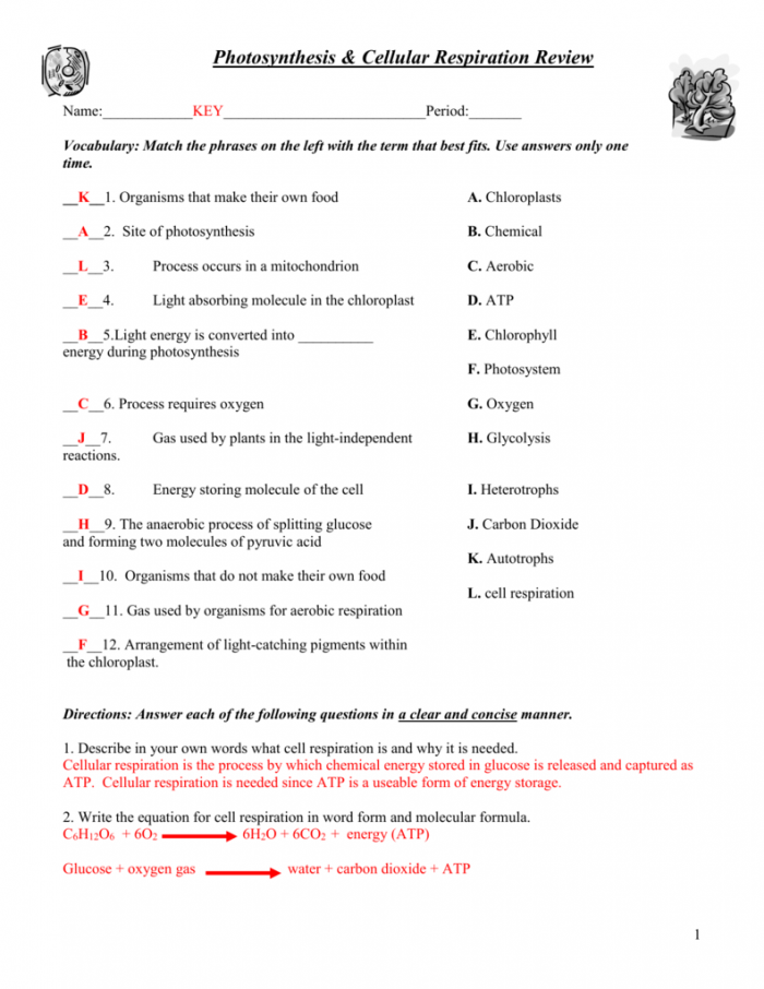 Photosynthesis And Cellular Respiration Recap Answer Key By The