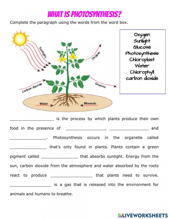 Photosynthesis Vs Cellular Respiration Worksheet