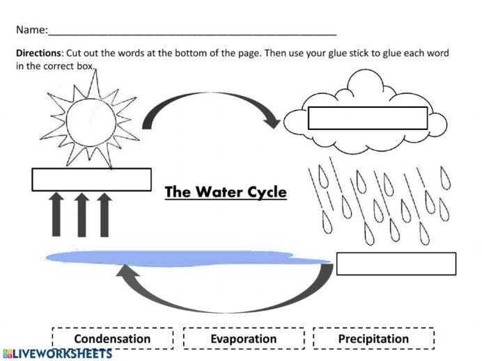 The Water Cycle Worksheets